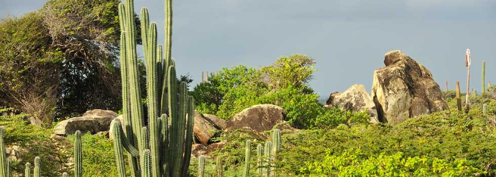 Aruba_Landscape