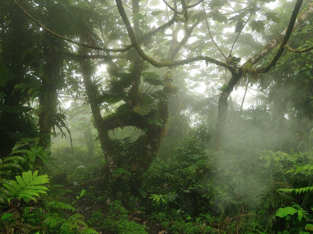 Saba_Landscape_big
